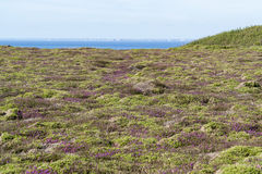 Colorful heath vegetation Royalty Free Stock Photos