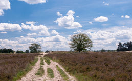 Colorful heith landscape in a nature reserve. Stock Photos