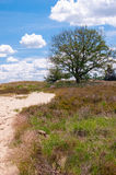Colorful heith landscape in a nature reserve. Royalty Free Stock Images