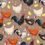 Colorful hens seamless royalty free illustration