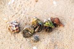 Colorful hermit crab on the beach in Thailand.  Royalty Free Stock Photos