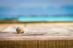 Colorful hermit crab. Climbing on a wooden board Stock Image