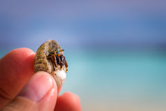 Colorful hermit crab in fingers of a child. In front of blue sky and ocean Stock Image