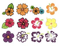Colorful hibiscuses. Set of colorful hibiscuses and plumeria Stock Photography
