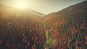 Colorful high mountain forest slope aerial view stock footage