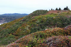 Colorful hill. Fall on the California north coast Stock Images
