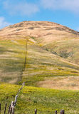 Colorful hill and fenceline. Fence line cuts through wildflowers and grasses on a hillside Stock Photography