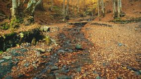 Colorful hill forest wild natural creek scenery stock footage