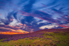Colorful hill slope covered by violet heather flowers. Royalty Free Stock Image