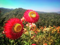 Colorful hillside. Beautiful flower on the hillside makes me feel Stock Photos