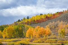 Colorful hillside Stock Photo