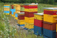 Colorful hives for bees. Some very colorful beehives for bees standing on a meadow Stock Photos
