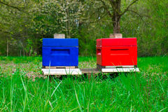 Colorful hives royalty free stock images