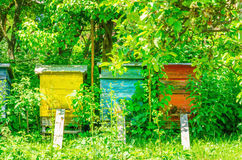 Colorful hives in traditional village Royalty Free Stock Image