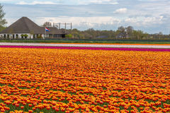 Colorful Holland Stock Images