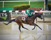 Colorful Horse Racing Photos from Belmont royalty free stock images