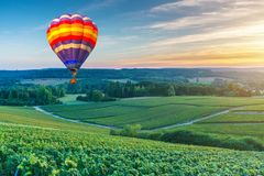 Colorful hot air balloons flying over champagne Vineyards at sunset montagne de Reims. France Royalty Free Stock Photos