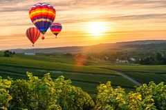 Colorful hot air balloons flying over champagne Vineyards at sunset montagne de Reims. France Royalty Free Stock Photo