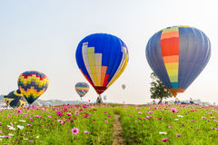 Colorful hot-air balloons flying over cosmos flowers Royalty Free Stock Images