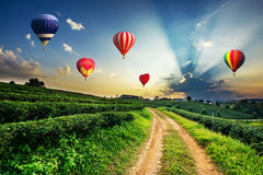 Colorful hot-air balloons flying over tea plantation landscape. At sunset royalty free stock photo