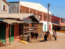 Colorful houses with zebu's - cow and car, Madagascar Stock Image