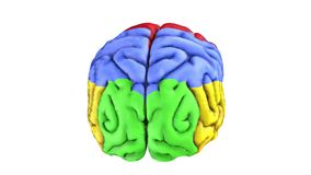 Colorful human brain Royalty Free Stock Photos