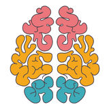 Colorful human brains Stock Photo