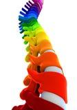 Colorful Human Spine Anatomy Stock Image