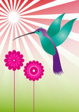 Colorful hummingbird Royalty Free Stock Photography