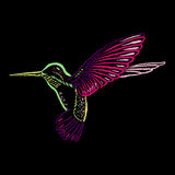 Colorful Hummingbird on blackboard hand-drawn with color chalks. Stock Photo