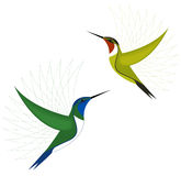 Colorful hummingbirds Stock Images
