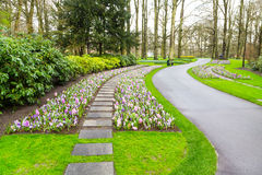 Colorful hyacinth and crocus flowers blossom in dutch spring garden Royalty Free Stock Photo