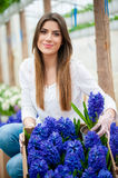 Colorful hyacinth flower garden Stock Image
