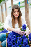 Colorful hyacinth flower garden Royalty Free Stock Photo