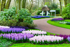 Colorful hyacinth flowers blossom in spring garden Royalty Free Stock Photos