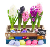 Colorful hyacinth flowers with eggs Royalty Free Stock Photo