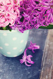 Colorful hyacinth flowers in a polka dot cup Stock Photo