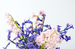Colorful hyacinth flowers in a vase. Colorful hyacinth flowers in a glass vase on white Stock Photography