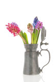 Colorful Hyacinths in tin vase Stock Images