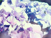 Colorful hydrangea flower bouquet Stock Photos