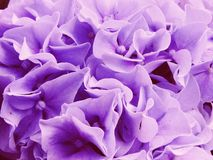 Colorful hydrangea flower bouquet close up Stock Photo