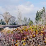Colorful, icy landscape after the storm. A peaceful scene of colorful shrubs, grasses, and trees covered in ice after freezing rain Stock Photo