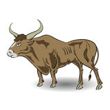 Old bull Royalty Free Stock Photos