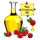 Colorful illustration of Cranberry oil 2. Vector illustration of Cranberry oil for food and cosmetic label and banner. Bottle of berry oil for cosmetic and Stock Photo