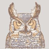 Colorful illustration of owl on gray background. Realistic drawing of bird vector illustration