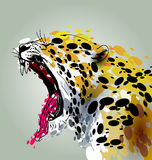 Colorful illustration roaring Jaguar. Head of roaring Jaguar. Colorful vector illustration Stock Photography