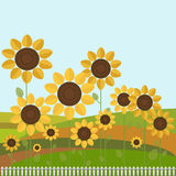 Colorful Illustration With Sunflowers. White Fence And Hills Stock Images