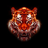 Colorful illustration of tiger Royalty Free Stock Photo