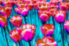 Colorful illustration of tulips Stock Photos