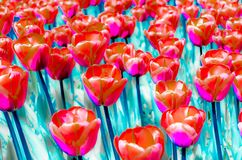 Colorful illustration of tulips Stock Images